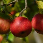 Wat betekent corona voor Pluk de Vruchten